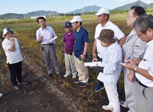 塩害で白い花が枯れ果てたソバ畑で状況を聞く田村議員(左端)=7日、鹿児島県南九州市②