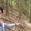 森林盗で現地調査②=28日、鹿児島県出水市